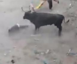 bestia toro video