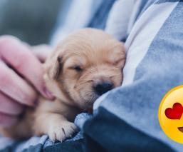 perritos sueños humanos