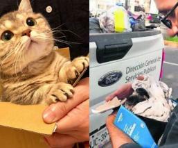 gatitos gatos callejeros abandonados buscan hogar casa dueño adopción toluca