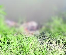 Cadáver putrefacto canal de riego Tetecala
