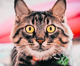 gato filtros redes
