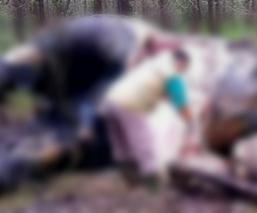 Elefante Sumatra masacrado