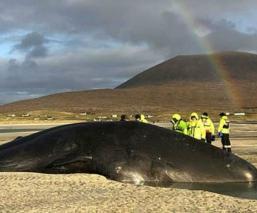 Basura en estómago de ballena