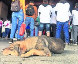 Autoridades registran a 29 perritos abandonados durante peregrinaciones, en CDMX