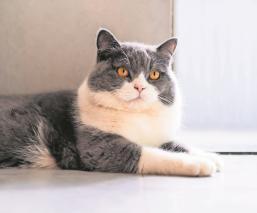 Gatito que tenía dos casas provoca batalla legal entre sus 'dueñas' por miles de dólares