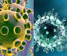 Fotos y diferencias del coronavirus, la influenza y el resfriado común bajo un microscopio