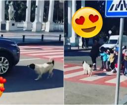 perro ayuda cruzar la calle
