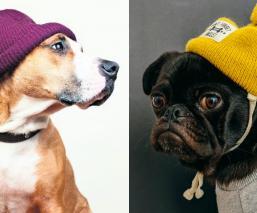perros frío