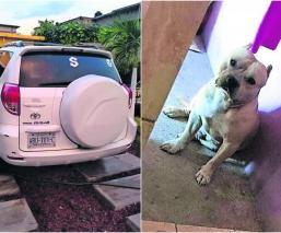 roban camioneta familia perro morelos