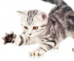 Conoce las claves de comunicación para entender qué nos quiere decir nuestro gato