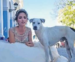Perrito callejero se cuela en fotos de quinceañera y enamora a todos en Internet