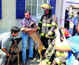 Dos perritos se salvan de morir calcinados tras un incendio en una lavandería, en Edomex