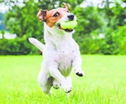 Aprende a cuidar perros