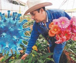 'Estamos a punto de la quiebra': Floricultor mexiquense sufre la crisis por el Covid-19