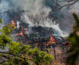Por hacer un TikTok, mujer provoca incendio en Tepoztlán