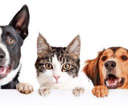 Enseña a los niños a cuidar BIEN a las mascotas