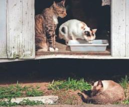 Mascotas que sí pueden contagiarse de coronavirus Covid-19, y las que no