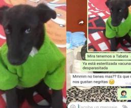 """La historia de """"Tabata"""", la perrita colombiana que no era adoptada por su pelaje negro"""