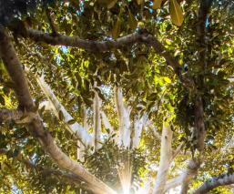 Atoran a seis en Edomex por podar árboles, querían que no 'estorbaran' en anuncio