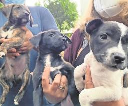 Vecinos ponen en adopción a canes que fueron abandonados en Cuernavaca