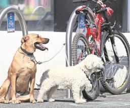 Encuentran a perros torturados y asesinados en Guanajuato y no aparece ni un vecino