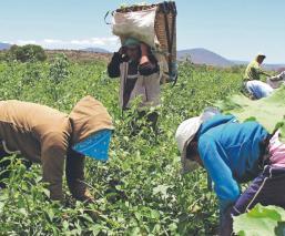 Pandemia del Covid agudiza carencias de 6 millones de jornaleros agrícolas, en México