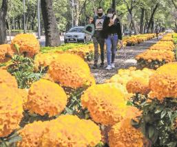 Decoran ocho vialidades principales en CDMX con flores de cempasúchil