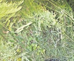 Perros encuentran cadáver en avanzado estado de descomposición en Morelos