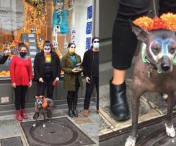 Mexicanos en París hacen sensacional performance de Día de Muertos con perro xoloescuincle