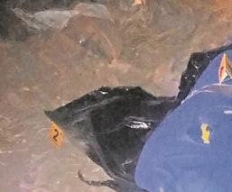 Vecinos hallan el cuerpo de un hombre embolsado y maniatado en el Edomex