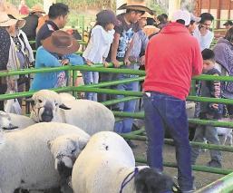 Plaza Ganadera en Edomex ignora protocolos sanitarios, el uso de cubrebocas es mínimo