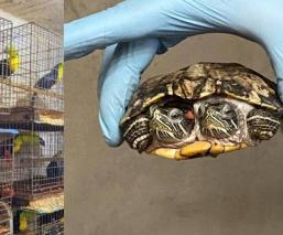 Rescatan a más de 15 mil aves y reptiles de un domicilio en Iztapalapa