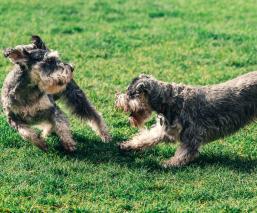 ¿Qué hago si mi perra está en celo y quiere hacer 'el delicioso' con mi pierna? Te damos tips