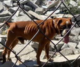 Continúa abandono y maltrato animal por pandemia en Edomex