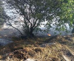 Bomberos del Edomex atendieron 290 incendios, la mayoría por quema de pastizales