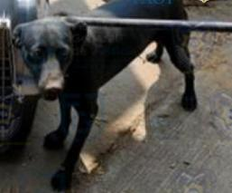 Rescatan a 26 perros que vivían apretados y entre sus heces, en departamento de Iztapalapa