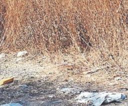 Hallan cadáver putrefacto envuelto con bolsas y cobijas en Morelos, lo mataron a golpes