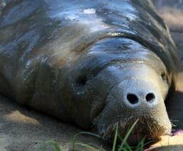 OMS pide suspender venta de mamíferos salvajes para consumo en mercado de alimentos