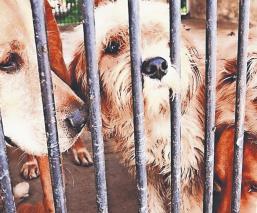 Proponen prohibir prácticas escolares con animales vivos, en CDMX
