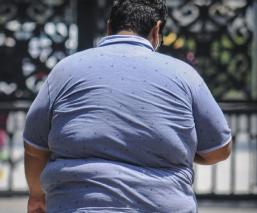 Españoles descubren fármaco que revierte la obesidad y enfermedades asociadas a ella