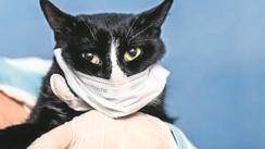 Hombre con Covid-19 contagió a su gatito y esto es lo que se sabe