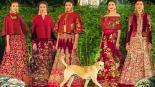 Perrito pasarela India modelo video