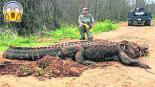 Hallan Caimán Gigante Estados Unidos