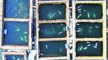 Exhíben cárcel ballenas Rusia