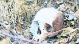 buscar PET encontraron huesos