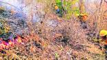 Incendios forestales México en llamas Conafor