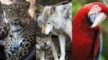 animales peligro extinción mexico