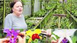 Mujer arma paraíso de orquídeas en 'El Descanso' en Colombia