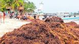 invertirán 52 MDP limpiar playas
