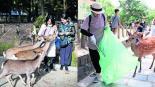 mueren ciervos comer plástico desechos basura turistas parque nara japón